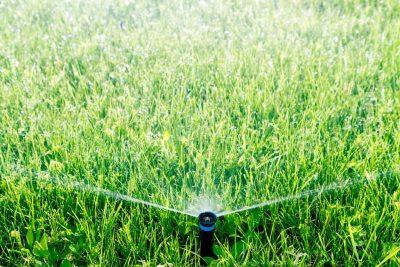 Все о фунгицидах для газонной травы