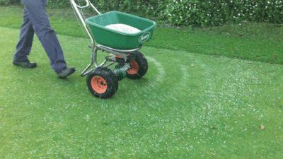 Фунгициды для травы газонной