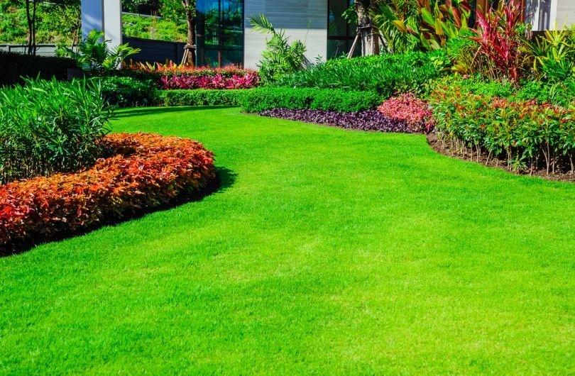 Желтеет газонная трава