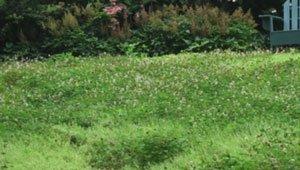 газон для ленивых