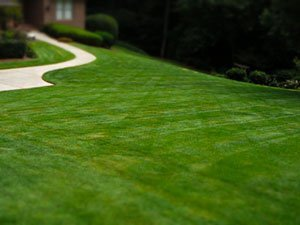 газонные травы посев