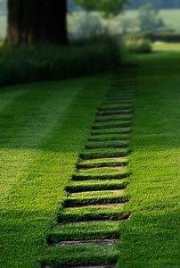 газоны в саду