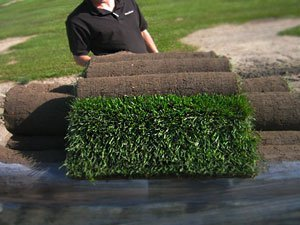 готовый газон цена