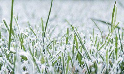 Советы по уходу за газоном зимой