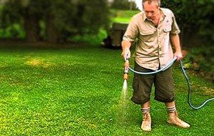 как правильно поливать рулонный газон