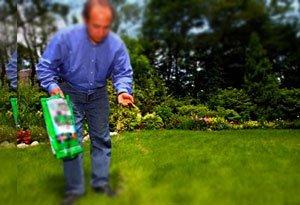 как сажать газон