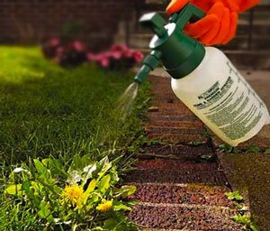 как ухаживать за газоном весной