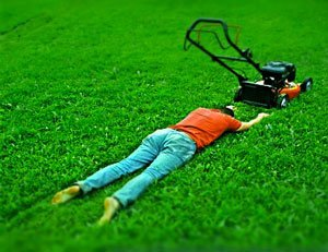 Как часто нужно стричь траву?