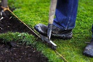 посадить газонную траву