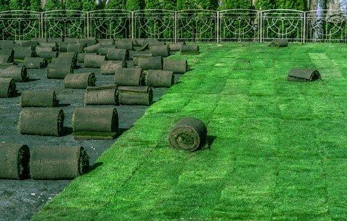 Рулонный газон под ключ
