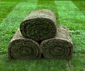 сколько стоит рулонный газон