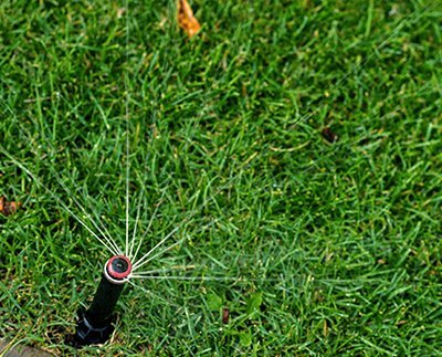 технология укладки газона