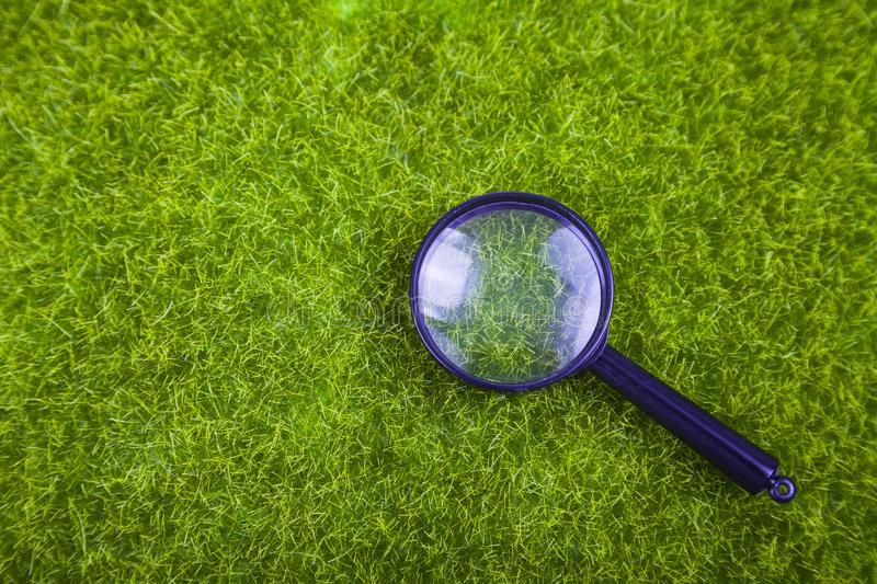 Самые опасные болезни газона и методы их лечения