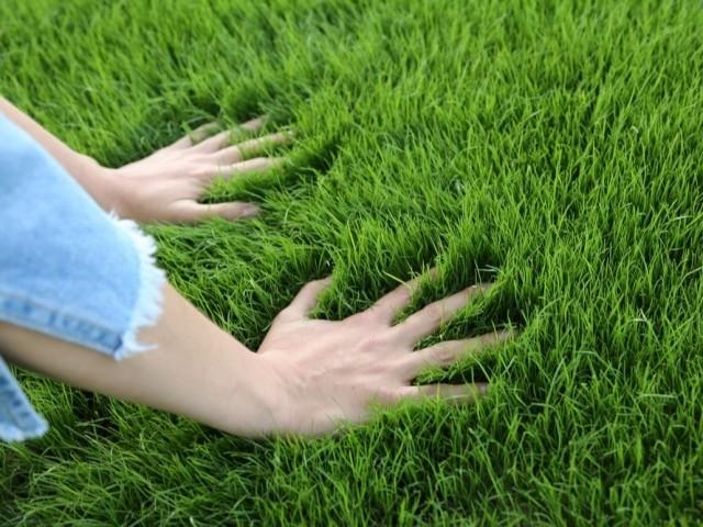как правильно сеять злаковые