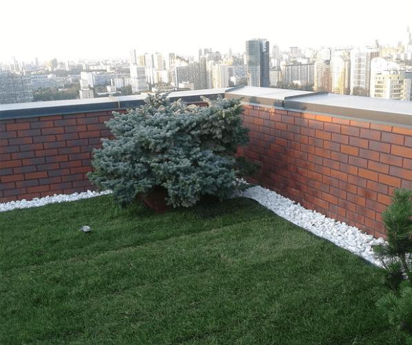 Подкормка растений