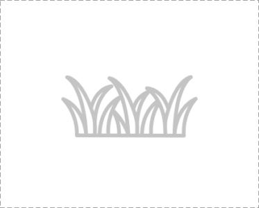 Газонная травосмесь