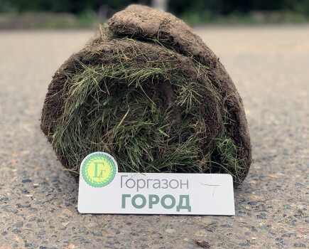 Рулонный газон для города