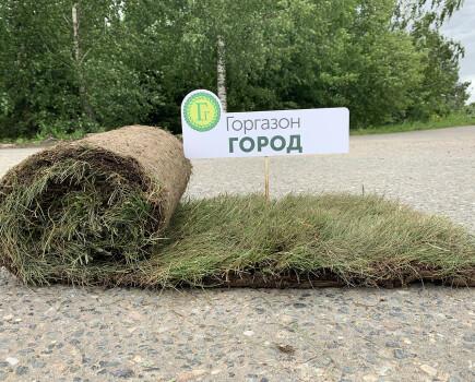 Самый дешевый газон