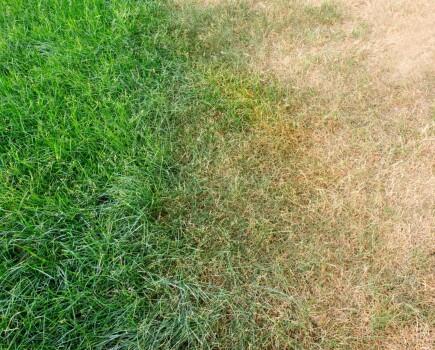 Лечение газона