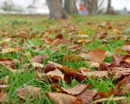 Очистка газона от листвы