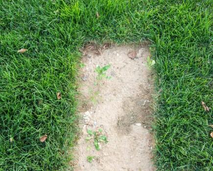Вертикуляция газона